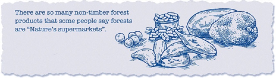 forest12