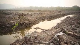 Documentary: Kalimantan – Saving the Forests for the Future