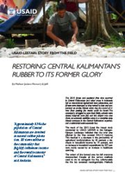 Story from the Field – Restoring Central Kalimantan's Rubber to Its Former Glory