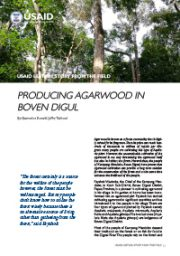 Story from the Field – Producing Agarwood in Boven Digoel