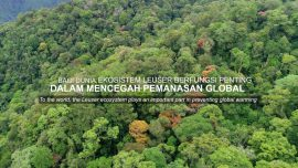 The Importance of Leuser Forest for Our Future
